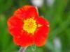 kwiaty-071
