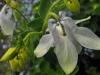kwiaty-072