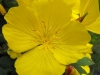 kwiaty-074