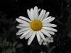 kwiaty-075