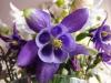kwiaty-076