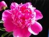 kwiaty-078