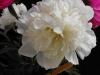 kwiaty-080