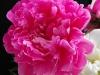 kwiaty-081