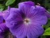kwiaty-084