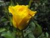 kwiaty-085