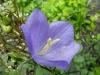 kwiaty-086