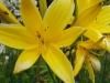 kwiaty-088