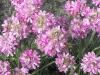 kwiaty-090
