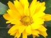 kwiaty-091