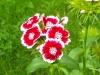 kwiaty-092