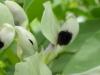 kwiaty-094