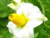 kwiaty-095