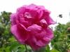 kwiaty-096
