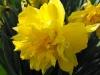 kwiaty-098