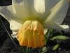 kwiaty-099