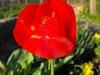 kwiaty-101