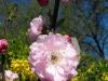 kwiaty-103
