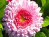 kwiaty-105