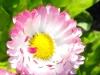 kwiaty-106