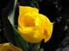 kwiaty-107