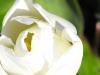 kwiaty-110