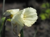 kwiaty-111