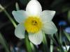 kwiaty-112