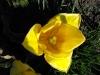 kwiaty-118