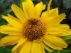 kwiaty-119