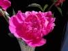 kwiaty-123