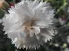 kwiaty-125