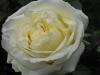kwiaty-126