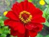 kwiaty-127