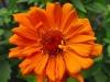 kwiaty-128