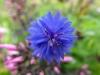 kwiaty-129