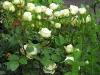 kwiaty-130