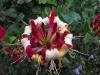 kwiaty-132