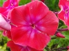 kwiaty-133