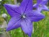 kwiaty-134