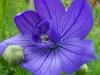 kwiaty-135