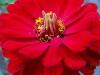 kwiaty-136