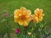 kwiaty-137