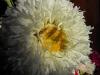 kwiaty-138