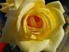 kwiaty-139