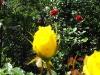 kwiaty-141