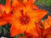 kwiaty-143