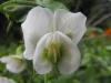 kwiaty-144