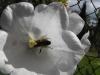 kwiaty-147