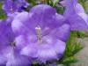 kwiaty-148